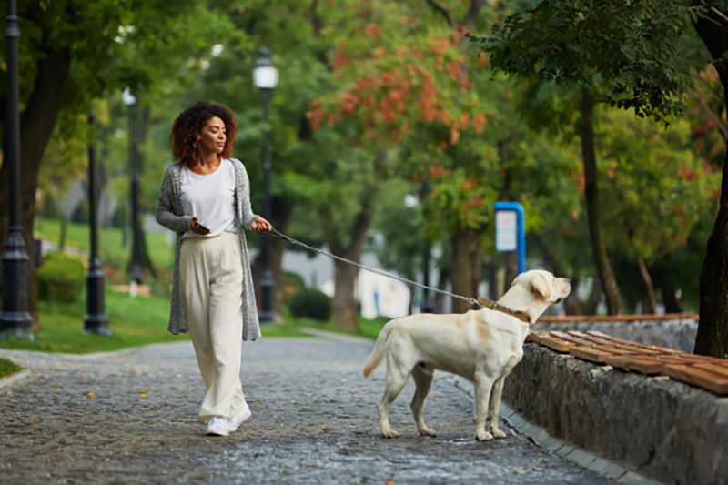 Dog Parks in Cape Town