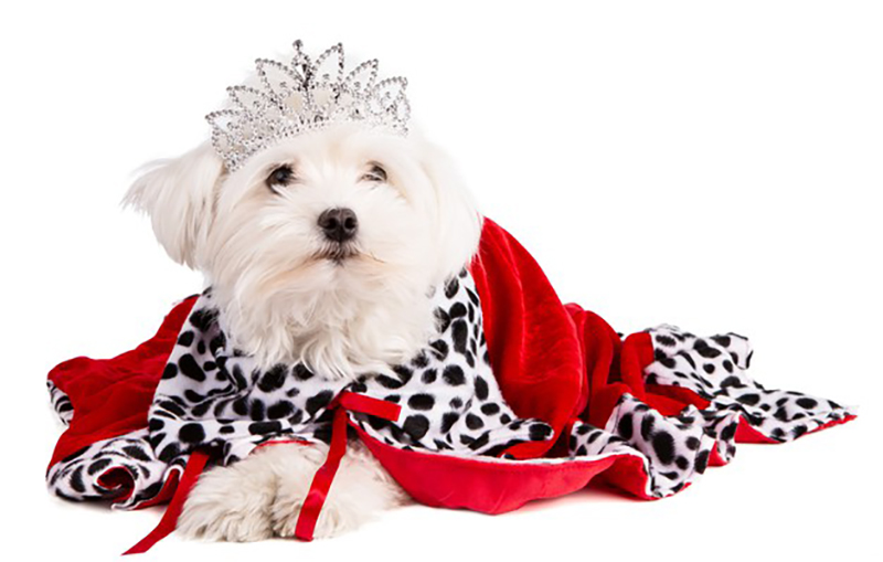 The wealthiest pets