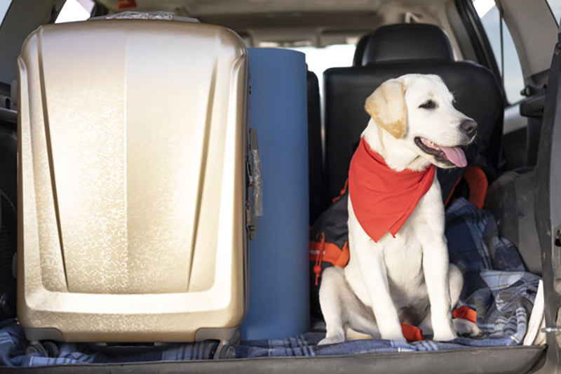 The doggy travel kit