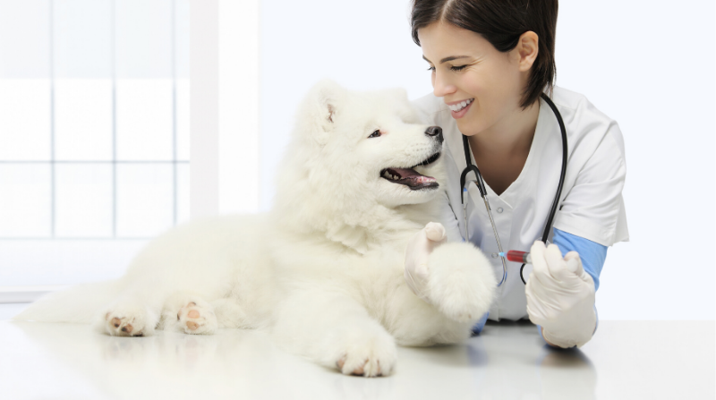 Oneplan Pet Insurance Cover Blood Tests