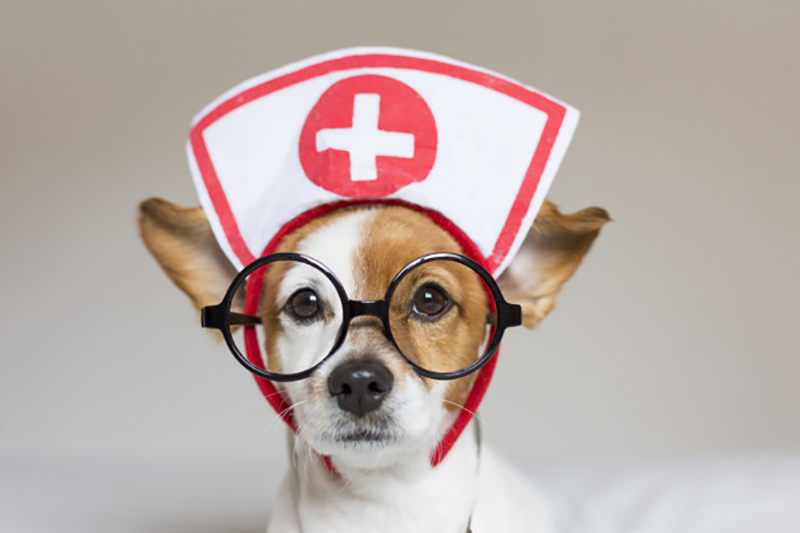 How to prepare your Pet for surgery