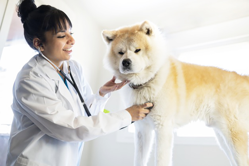 Affordable Pet Insurance