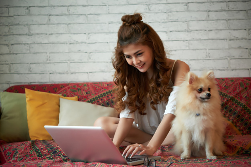 hShopping For Pet Insurance