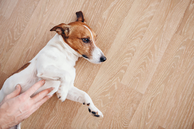 remedies for your dog's upset stomach
