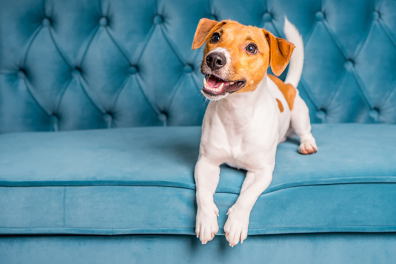 help your newly adopted pet settle into your home