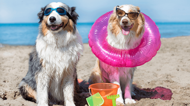 Beach Days With Your Dog