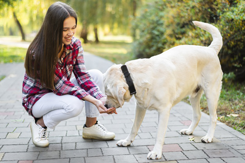 How To Find The Pawfect Pet Sitter