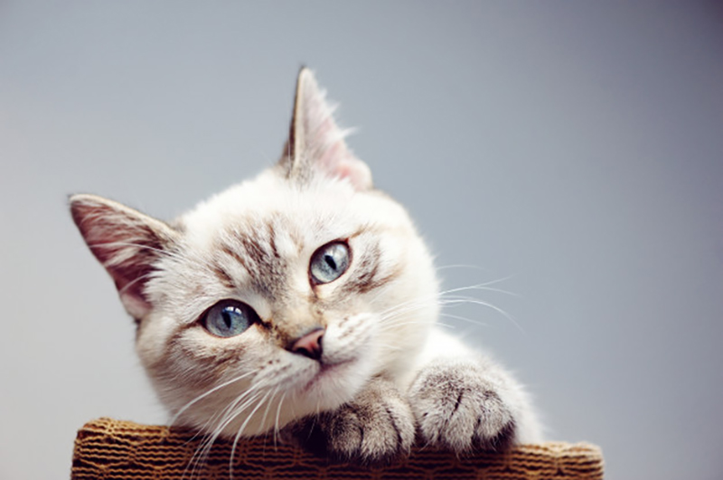 What does cat insurance cost