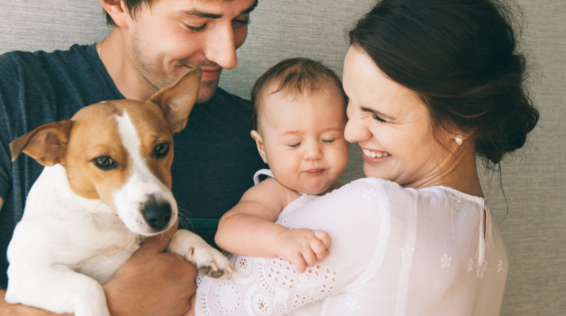 Preparing Your Dog For Your New Baby