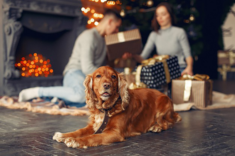 Furry Friends and the Festive Season