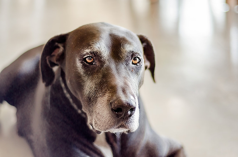 What pet insurance plan is best for my older pet